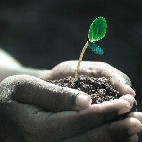 grow.cz_svet-vyzivy.cz_